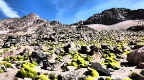 Paisaje de yaretas y rocas